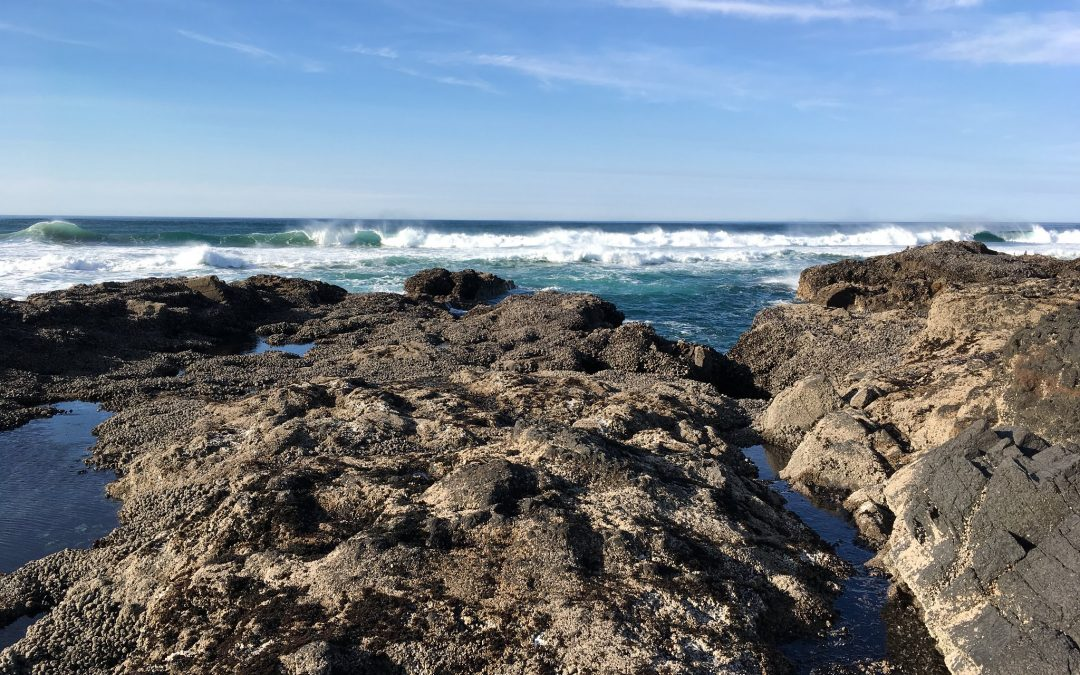 8th Cape Perpetua Land-Sea Symposium 2020