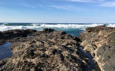 8th Cape Perpetua Land-Sea Symposium 2020