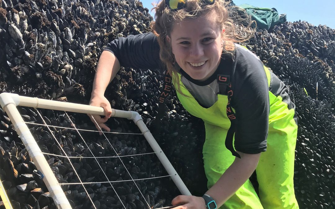 Tiny But Mighty: Can Two Small Predator Species Compensate for the Loss of Ochre Stars in the Rocky Intertidal After Sea Star Wasting?