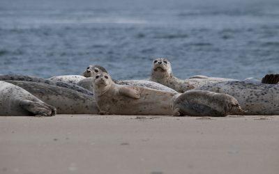 Satellite Telemetry, Behavior & Ecology of Pinnipeds on the Oregon Coast