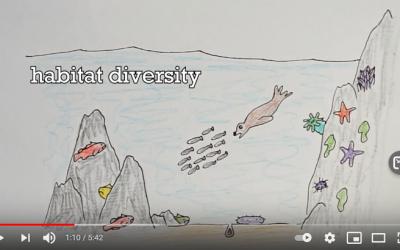 What makes Cape Perpetua Marine Reserve special?